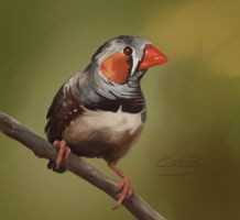 Zebra Finch by the-witty-kitty