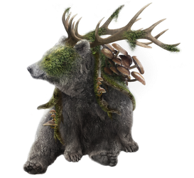 The Nature Bear Sol by Knask