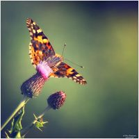 Little Creatures 066 by Frank-Beer