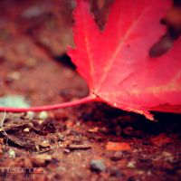 leaf X by interiornoise