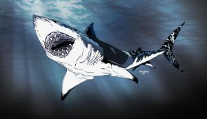 Carcharodon Carcharias by theICB