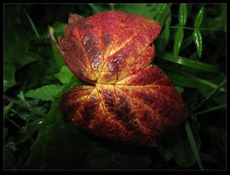 Bloody leaf of the blackberry by ACIDMEAT