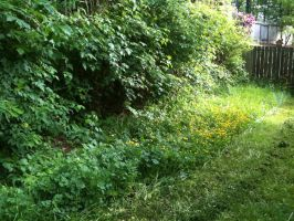 Mowing a jungle by exintrovert