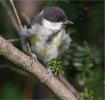 My first yellow feathers by plumita1