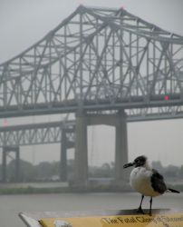 Seagull by the Bridge by oasis19