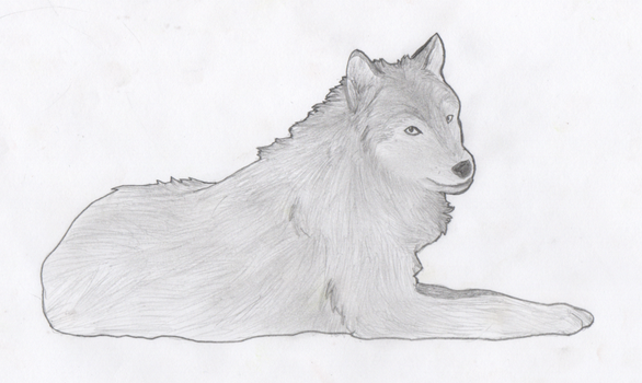 Wolf by Squeemishness