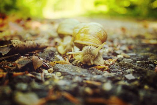 Snails by Viktoria-Photography