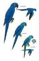 Blue Macaws by Guadisaves02