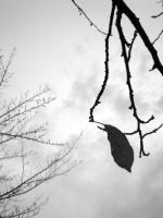 The Last Leaf by freyiathelove