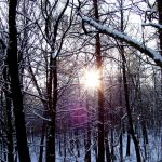 sunny forest by IsiEnLinea