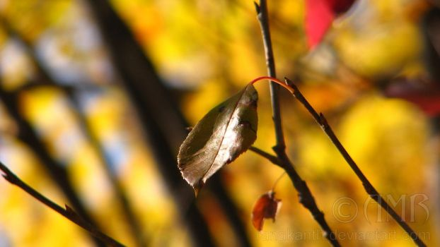 Autumn Leaves 5 by Ranakanth