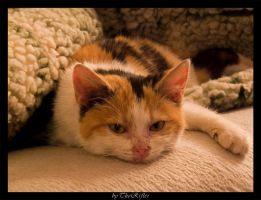 Lazy Cat by therifler