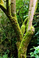 Mossy Branches by joerimages