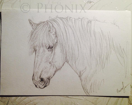 Horse sketch 1 by molleisadog