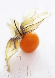 Cape Gooseberry by theresahelmer