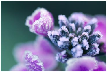Purple Crystals by Hollities