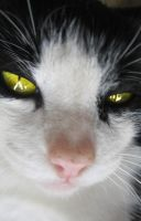 cat with yelow eyes by Poof2507