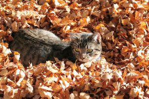 Chillin' in the Fall by Pengibuddy