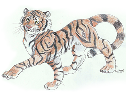 A Tiger by TussenSessan