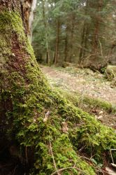 Mossy Root by Olgola