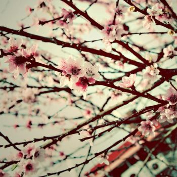 oh my beautiful spring II by frozenbreath