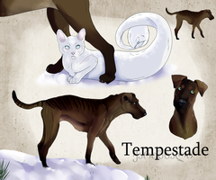 Home Constest! Tempestade by BeyondTheIllusion