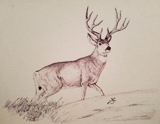 Buck by mjarrett1000