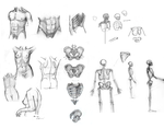 Body Studies by merbel