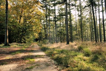 Westerbork - Woods by NL-Stitch