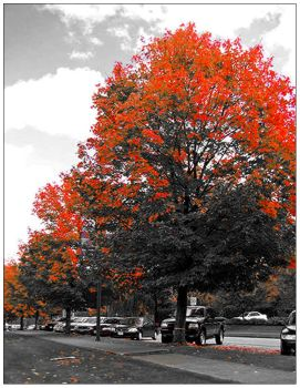 Tree on Fire by thirtynine