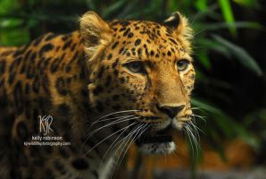Skodje the Leopard by Shadow-and-Flame-86