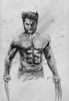 The Wolverine by Graymalkin2112