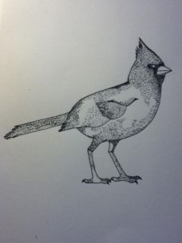Cardinal Stippling Finished by UbiOokami23