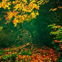 Fall by Milie-Photography