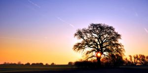 The sun and tree by tomsumartin