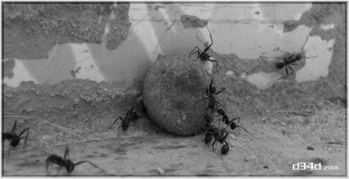 Ant party by D34D