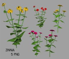 Zinnia by SuicideOmen
