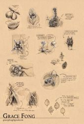 School - Plants Worksheet by fictograph