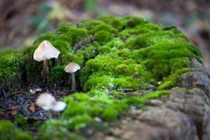 The Mushroom are lying on moss by Deviant-Kaneda