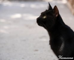 A Black Cat by yesmeena