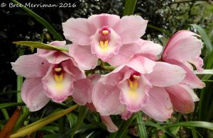 Pink Orchids by BreeSpawn