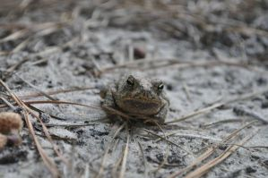 Toad by CAEloquent