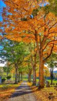 Colors of Autumn by wcpope