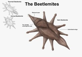 REP: The Beetlemites by Ramul