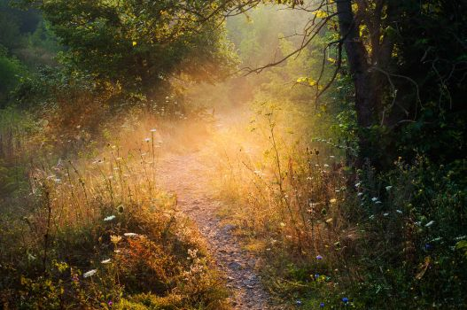 Sunny Pathway by third-one