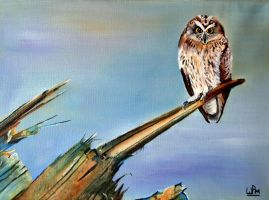 Short eared owl by WendyMitchell
