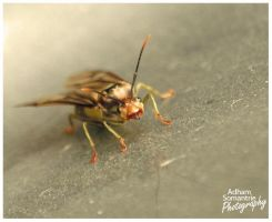 Macro Fly by adhamsomantrie