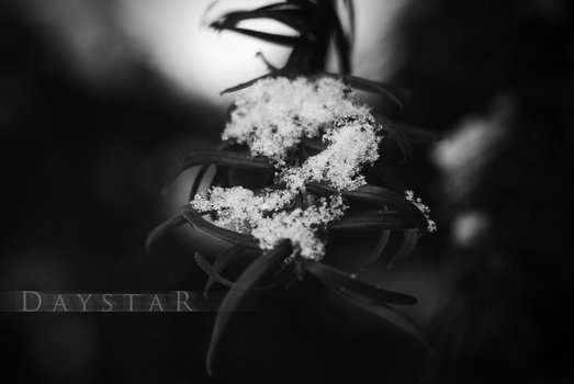 Monochrome tranquility by Daystar-Art