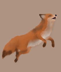The Summer Fox by Limerence-Art