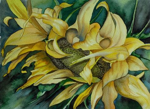 A Sunflower named Madeline by baglady